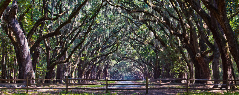 Wormsloe State Park GA