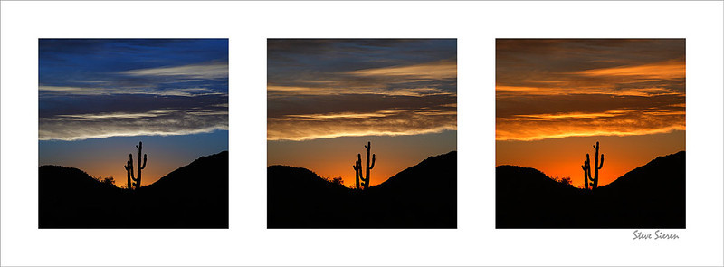 Saguaro Triptic<br /> Mariposa Mountain Wilderness - Sonora Desert, Arizona