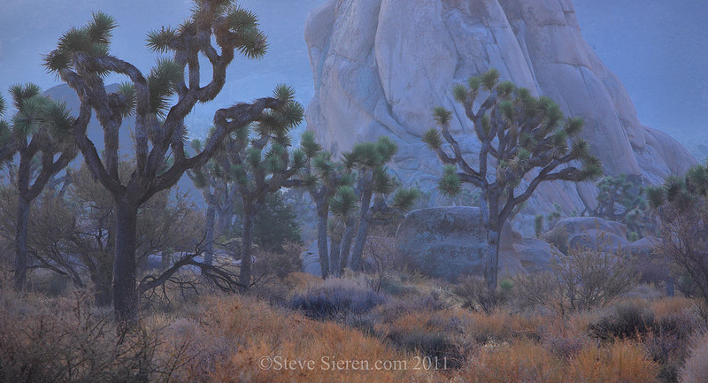 Joshua trees and boulders in Hidden Valley, Joshua Tree National Park