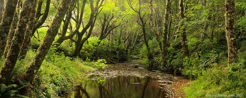 Lost Coast, California, Creek Panorama