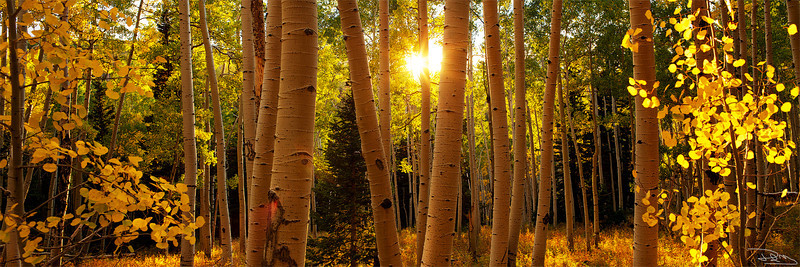 Aspens Light