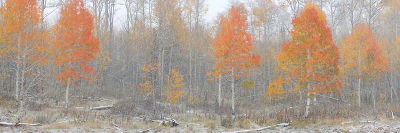 Watercolor of Fall
