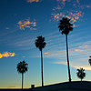 The silhouettes of individual palm trees rise into the evening sky above California's Pacific Coast Highway.