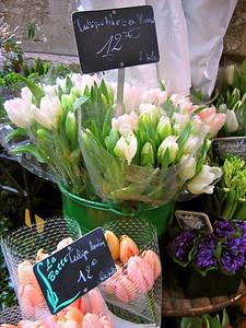 Paris Flower #14