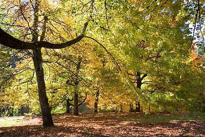Hoyt Arboretum_6922 (87879744)