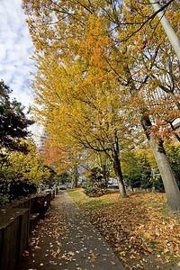 Portland Autumn 1 (88819577)