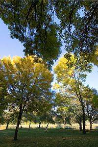 Trojan Park Fall Colors_6752 (87186525)