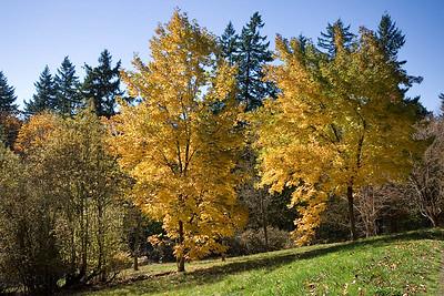 Hoyt Arboretum_6903 (87879743)