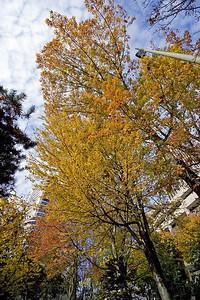 Portland Autumn 2 (88819580)