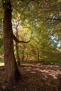 Hoyt Arboretum_6925 (87879745)