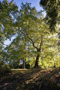 Hoyt Arboretum_6882 (87879742)