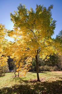 Hoyt Arboretum_6900 (87919693)