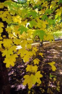 Hoyt Arboretum_6945 (87879747)