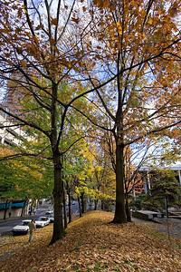 Portland Autumn 3 (88819583)