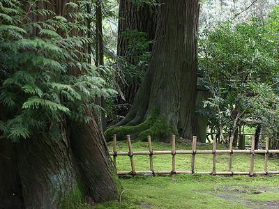 Japanese Garden 4 (41237933)
