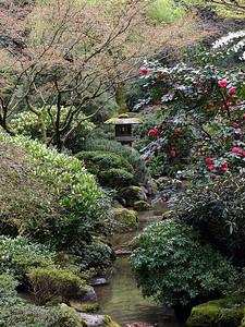 Japanese Garden 13 (41237929)