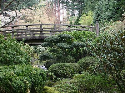 Japanese Garden 10 (41237926)