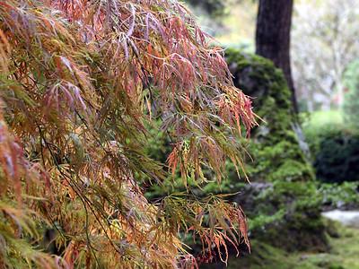 Japanese Garden 1 (41237925)