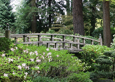 Japanese Garden 11 (41237927)