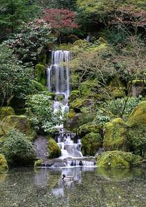 Japanese Garden 5 (54426091)