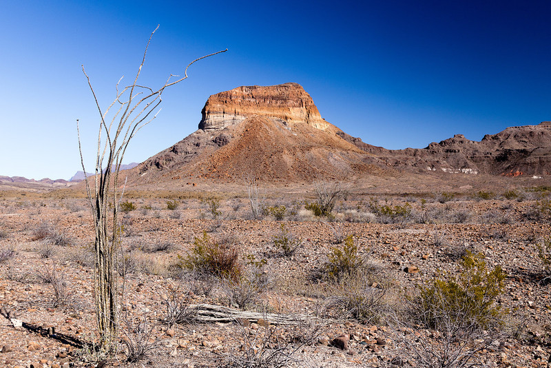 Castolon with Ocotillo