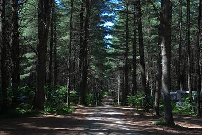Algonquin Park Trail