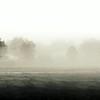 """Whisper"" (Hush B&W)<br /> <br /> First frost October 2008, Gordon Hall - east field, Dexter, MI"
