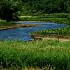 """Reclaimed River""<br /> <br /> Dexter Mill Pond, undamed spring 2008, returning to Mill Creek."