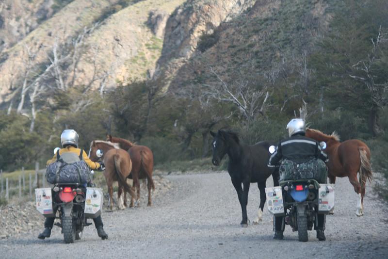 Los Glaciaries National Park, Argentina. 2009. Horses.