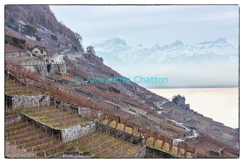 Lundi 9 décembre 2013: le lac Léman et les vignobles d'Epesses et du Dézaley.