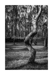Twisted Tree Black and White
