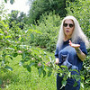 Lori Wiley, pictured, and her husband Kevin have launched a mission to save the Pearl Hill Road orchard. A developer recently brought the property for $100,000. Lori talks about the orchard on Friday afternoon as he stands among the trees in the orcahrd. SENTINEL & ENTERPRISE/JOHN LOVE