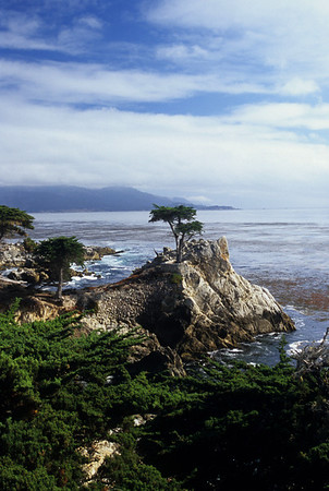 Pebble Beach Cypresses
