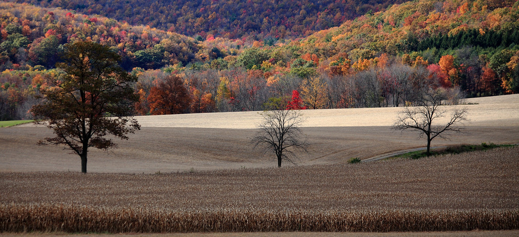 October fields and mountain backdrop, Rebersburg, PA