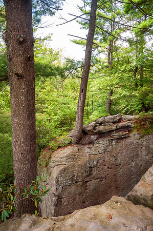 Cook Forest State Park