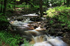Loyalsock Creek Tributary