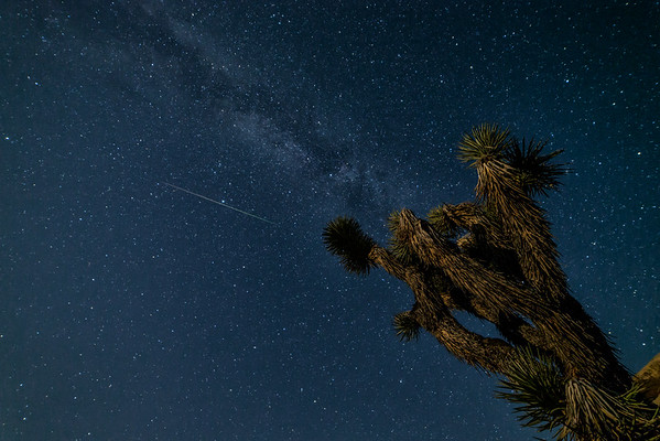 Perseid Meteor Shower at Joshua Tree 8-12-16