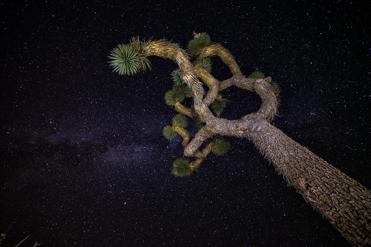 IMAGE: https://photos.smugmug.com/Landscapes/Perseid-Meteor-Shower-at-Joshua/i-M5VDsCJ/0/X2/BPDX5250-Edit-X2.jpg