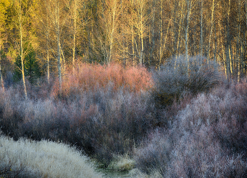 Morning Light by Payette River, McCall, Idaho
