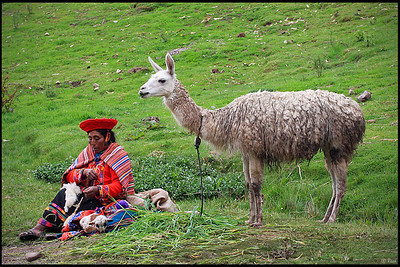 Peruvian Woman in Traditional Clothing with Llama