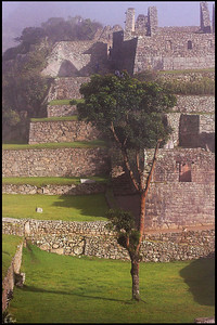 Tree and Inca Ruins in Dense Morning Fog, Machu Picchu