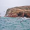 Balestas Islands, Paracas national park , Peru