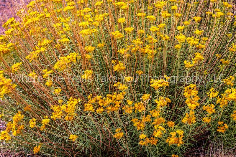 19.  A Summer Shade Of Yellow