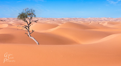 Nest and Tree Surrounded by Sand Dunes