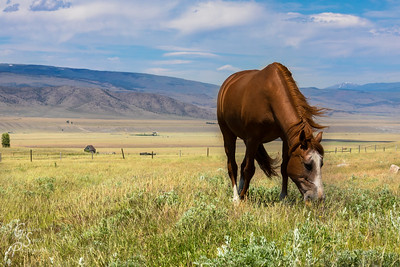 Grass for More than One Horse