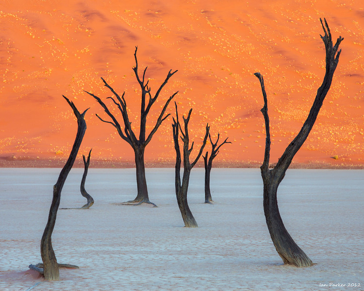 Camelthorn trees and glowing Dune: Deadvlei, Namibia