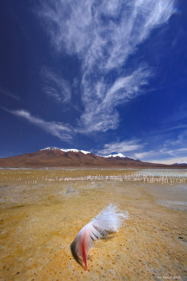 Flamingo feather: Laguna Verde, Bolivia