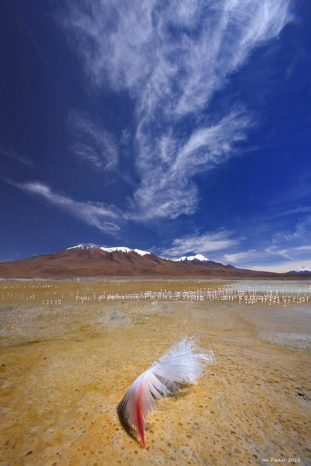 Flamingo feather: Laguna Verde, Bolivia