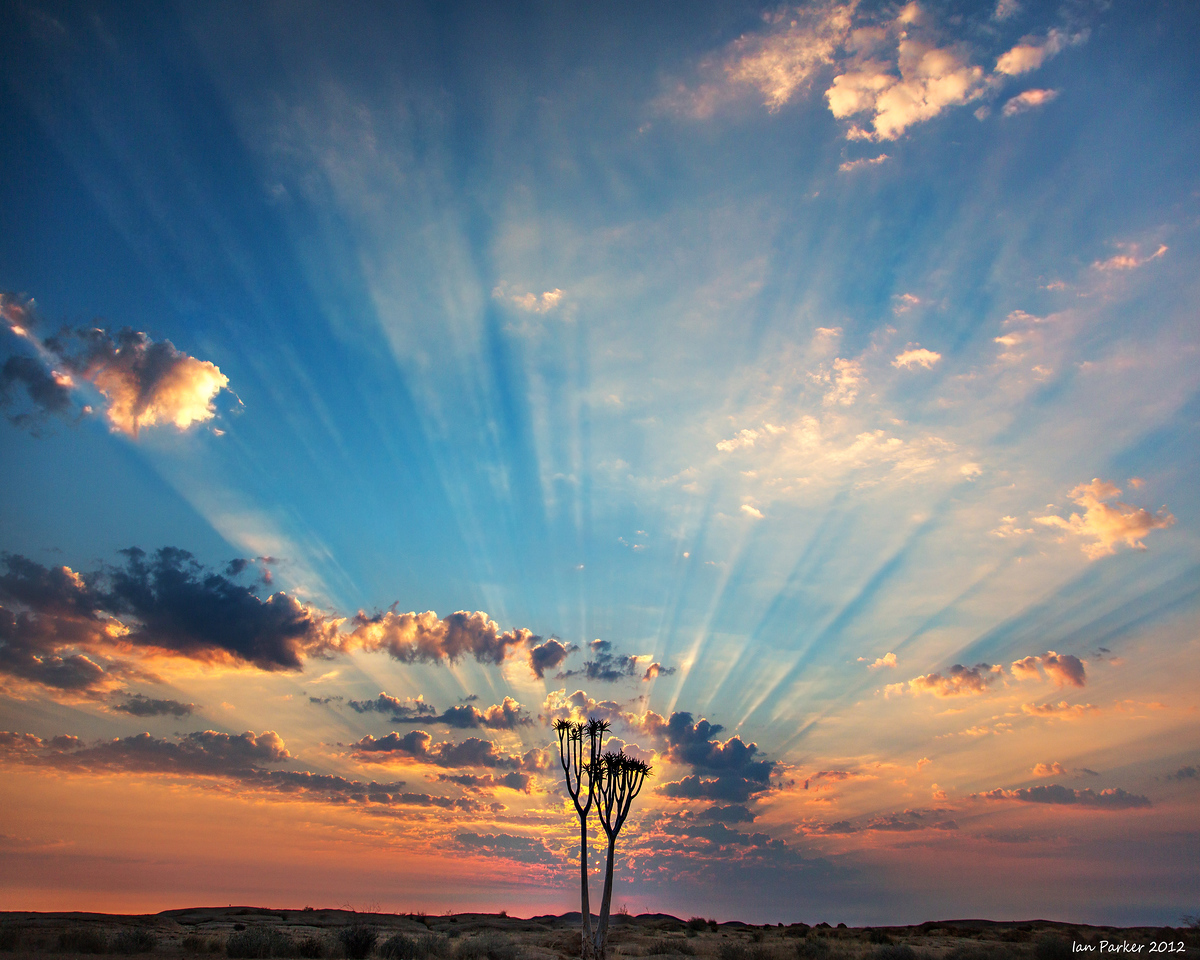 God-rays over Aloe dichotomous: Namibia