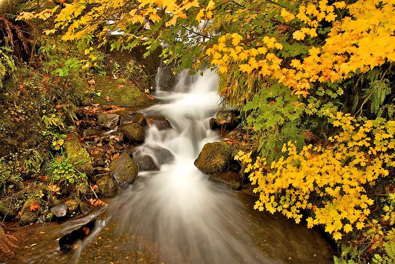 Columbia Gorge Creek